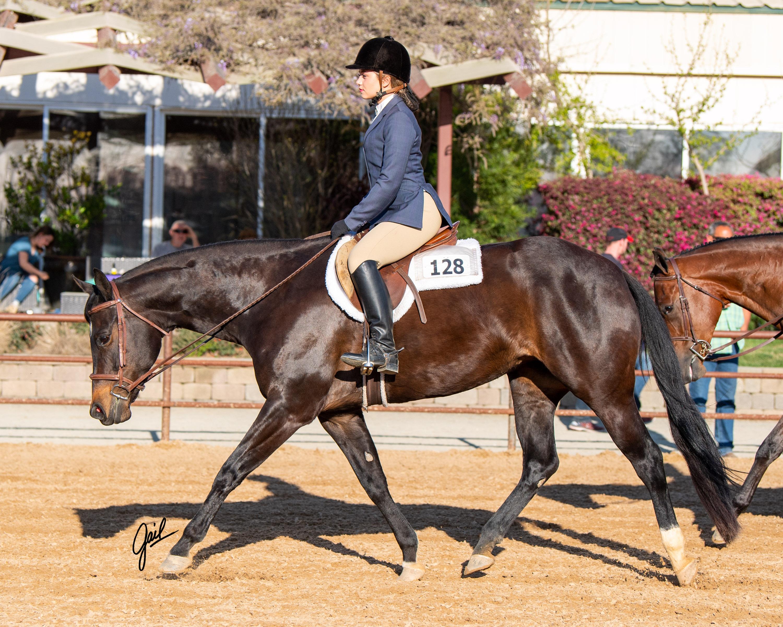 Gold N Grand Murieta Equestrian Center